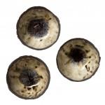 Muffin Ceramics_005